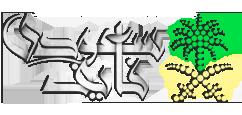 سعودي فايف